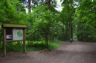 Le bois du Laerbeek